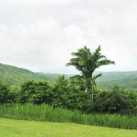 travenius-destination-barbados-04