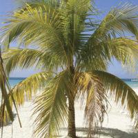 travenius-destination-jamaica-01
